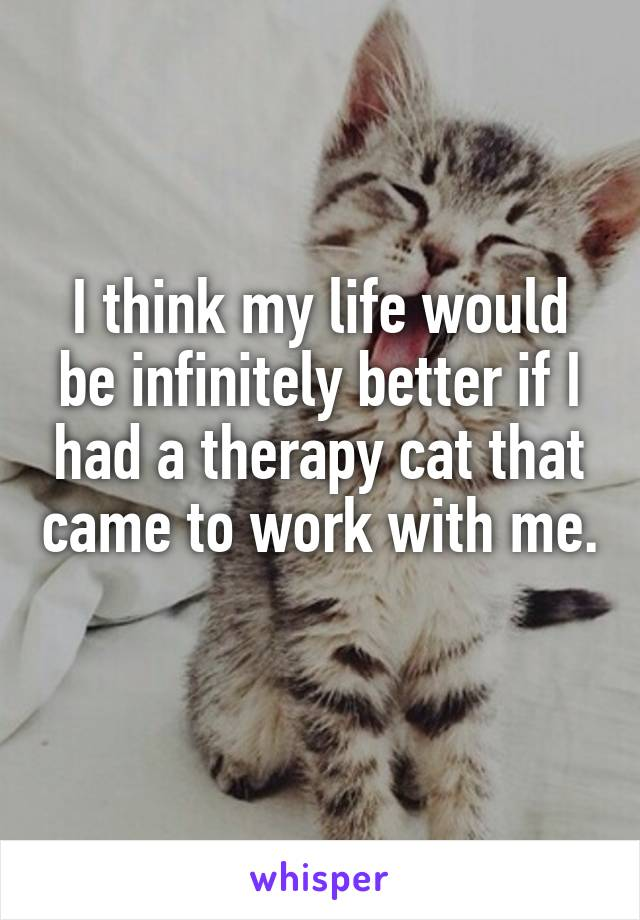 I think my life would be infinitely better if I had a therapy cat that came to work with me.