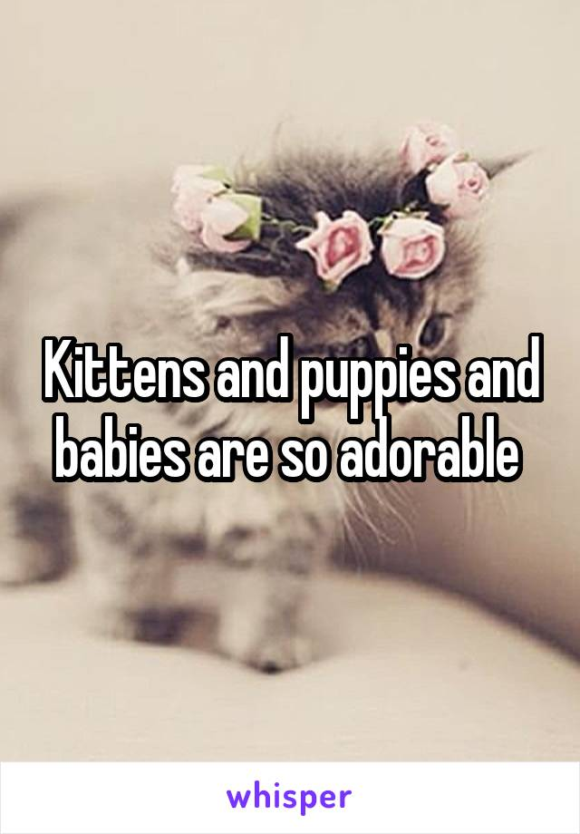 Kittens and puppies and babies are so adorable