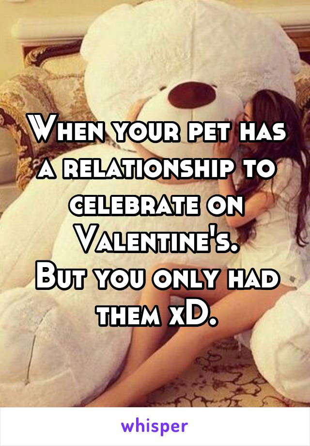 When your pet has a relationship to celebrate on Valentine's. But you only had them xD.