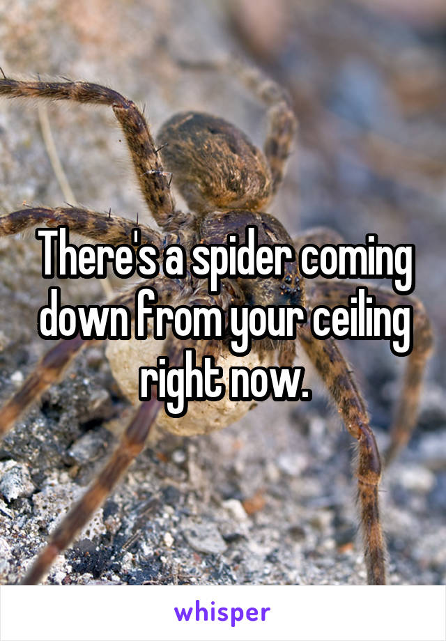 There's a spider coming down from your ceiling right now.