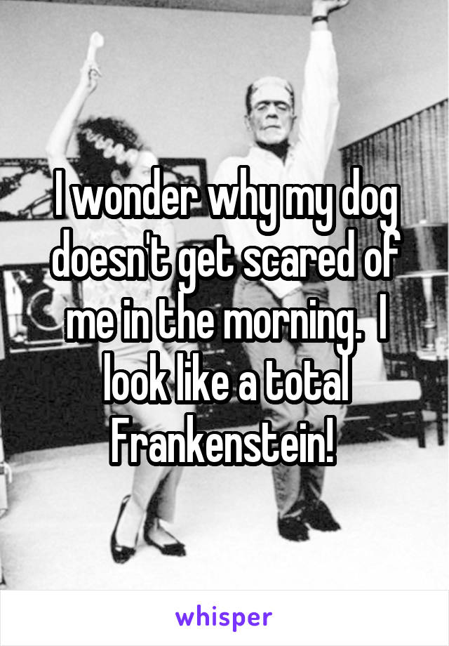 I wonder why my dog doesn't get scared of me in the morning.  I look like a total Frankenstein!