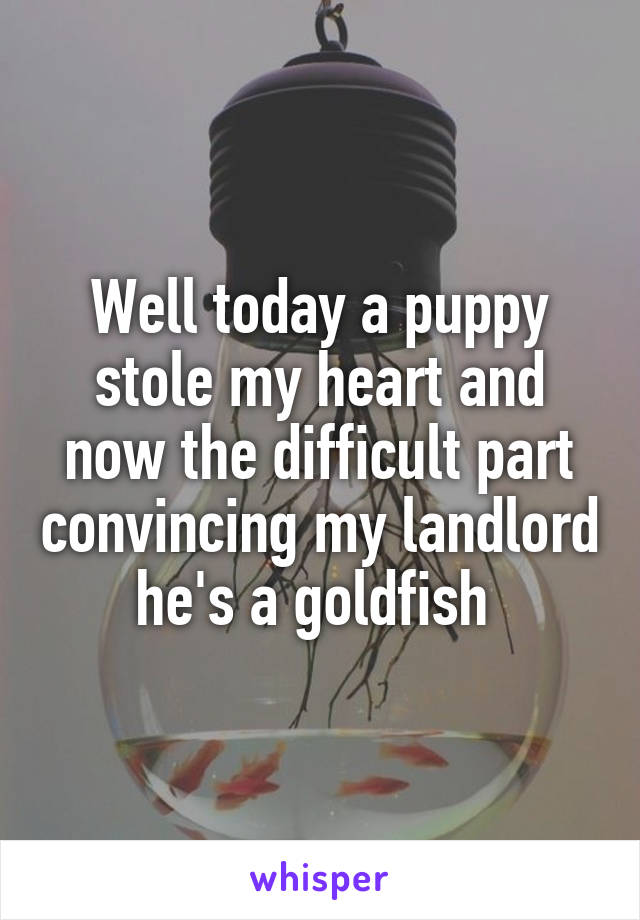 Well today a puppy stole my heart and now the difficult part convincing my landlord he's a goldfish