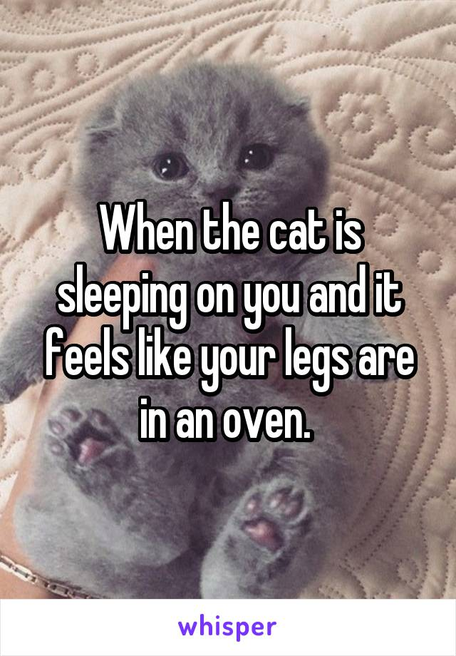 When the cat is sleeping on you and it feels like your legs are in an oven.