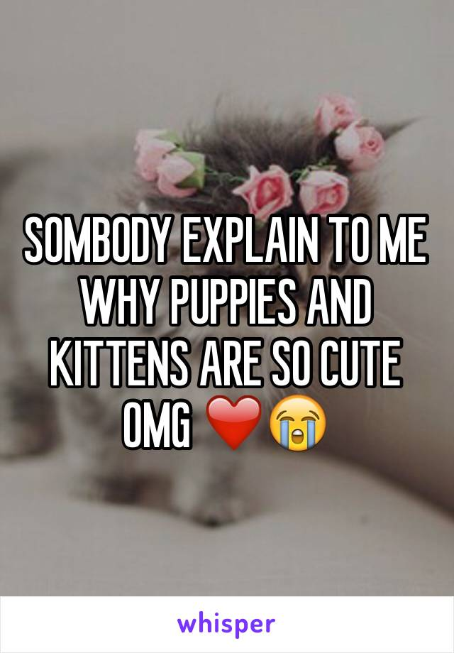 SOMBODY EXPLAIN TO ME WHY PUPPIES AND KITTENS ARE SO CUTE OMG ❤️😭
