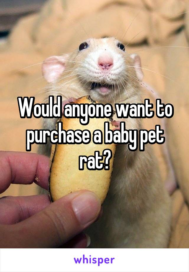 Would anyone want to purchase a baby pet rat?