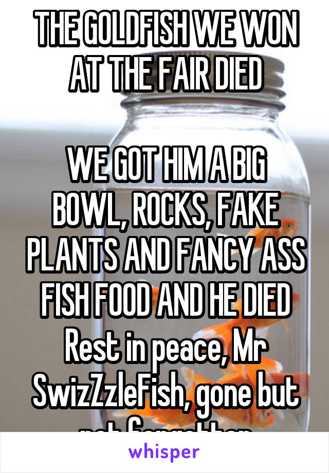 THE GOLDFISH WE WON AT THE FAIR DIED  WE GOT HIM A BIG BOWL, ROCKS, FAKE PLANTS AND FANCY ASS FISH FOOD AND HE DIED Rest in peace, Mr SwizZzleFish, gone but not forgotten