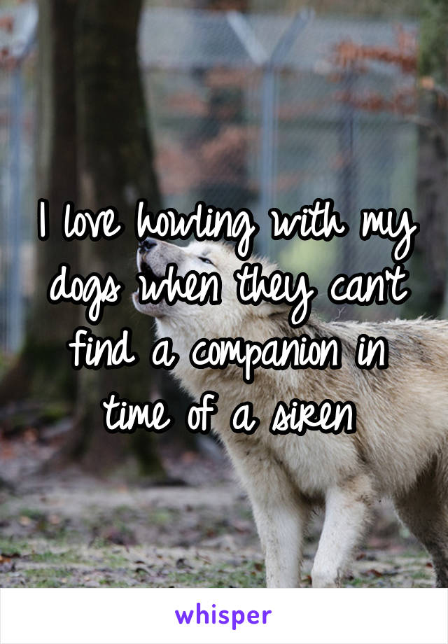 I love howling with my dogs when they can't find a companion in time of a siren