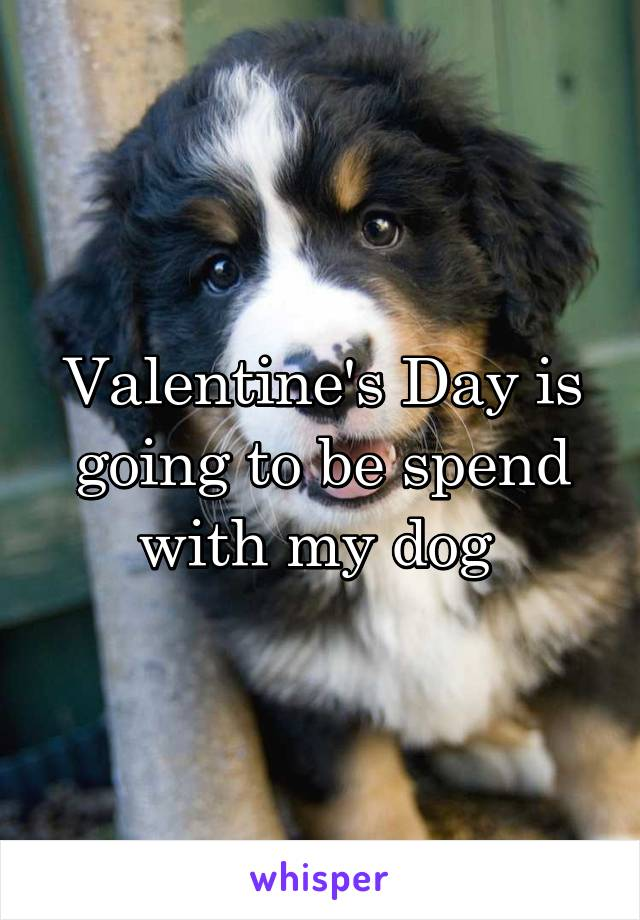 Valentine's Day is going to be spend with my dog