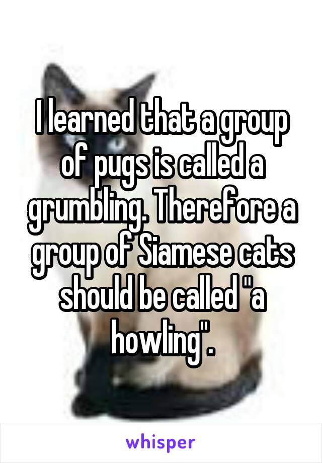 """I learned that a group of pugs is called a grumbling. Therefore a group of Siamese cats should be called """"a howling""""."""