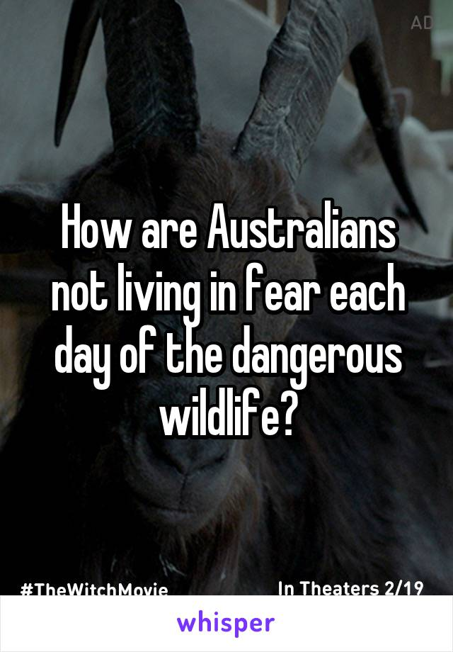 How are Australians not living in fear each day of the dangerous wildlife?