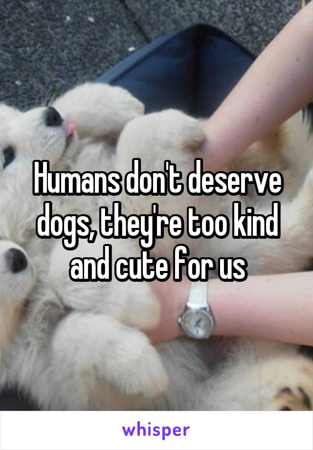 Humans don't deserve dogs, they're too kind and cute for us