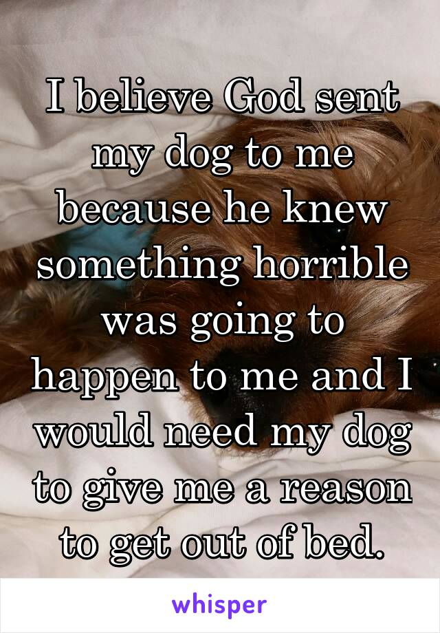 I believe God sent my dog to me because he knew something horrible was going to happen to me and I would need my dog to give me a reason to get out of bed.