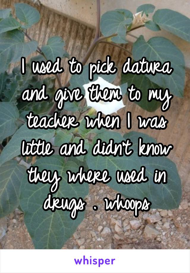 I used to pick datura and give them to my teacher when I was little and didn't know they where used in drugs . whoops