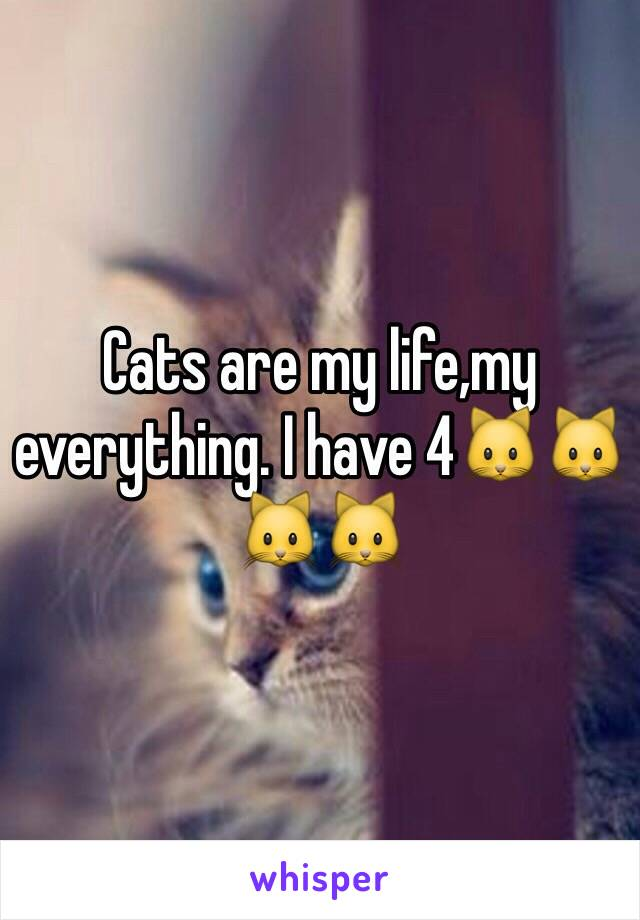 Cats are my life,my everything. I have 4🐱🐱🐱🐱