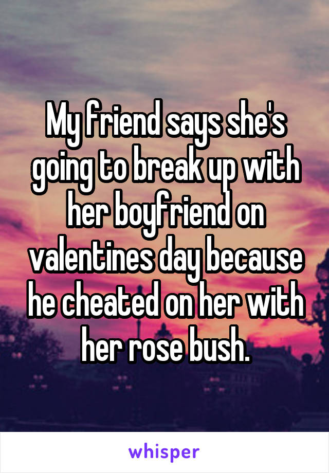 My friend says she's going to break up with her boyfriend on valentines day because he cheated on her with her rose bush.