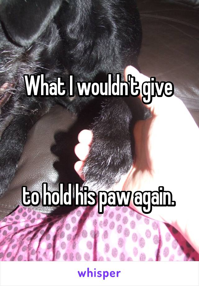 What I wouldn't give     to hold his paw again.