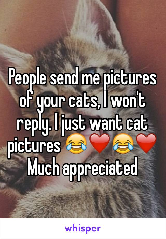 People send me pictures of your cats, I won't reply. I just want cat pictures 😂❤️😂❤️  Much appreciated