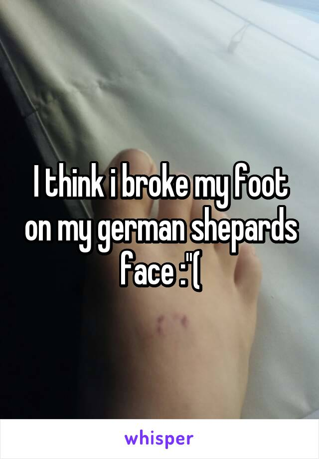 I think i broke my foot on my german shepards face :''(