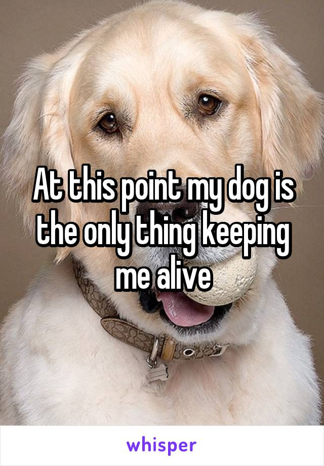 At this point my dog is the only thing keeping me alive