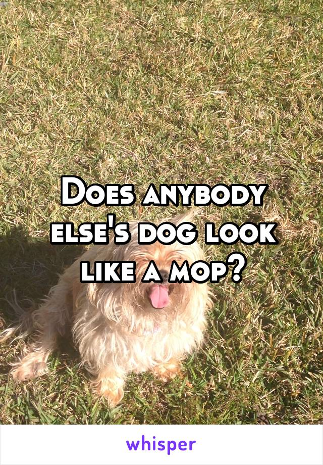 Does anybody else's dog look like a mop?