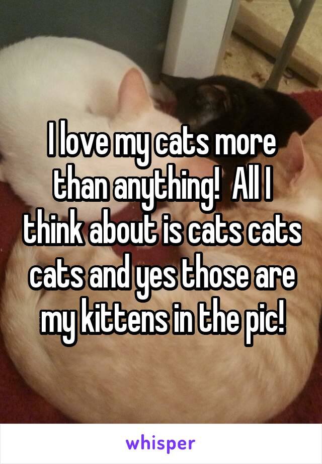 I love my cats more than anything!  All I think about is cats cats cats and yes those are my kittens in the pic!