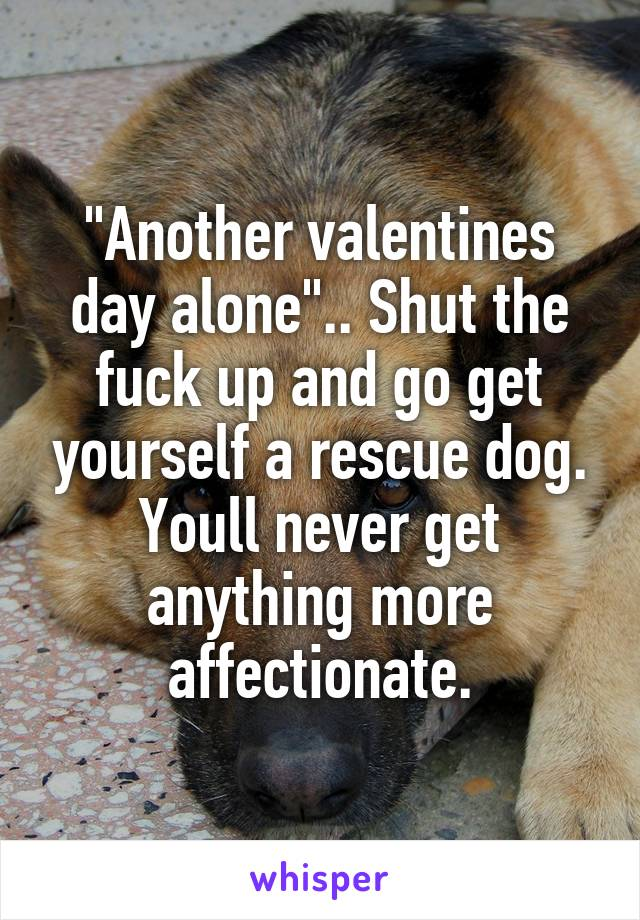 """Another valentines day alone"".. Shut the fuck up and go get yourself a rescue dog. Youll never get anything more affectionate."