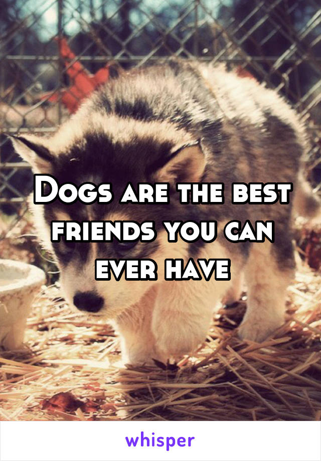 Dogs are the best friends you can ever have