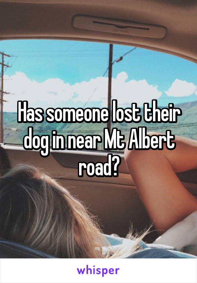 Has someone lost their dog in near Mt Albert road?