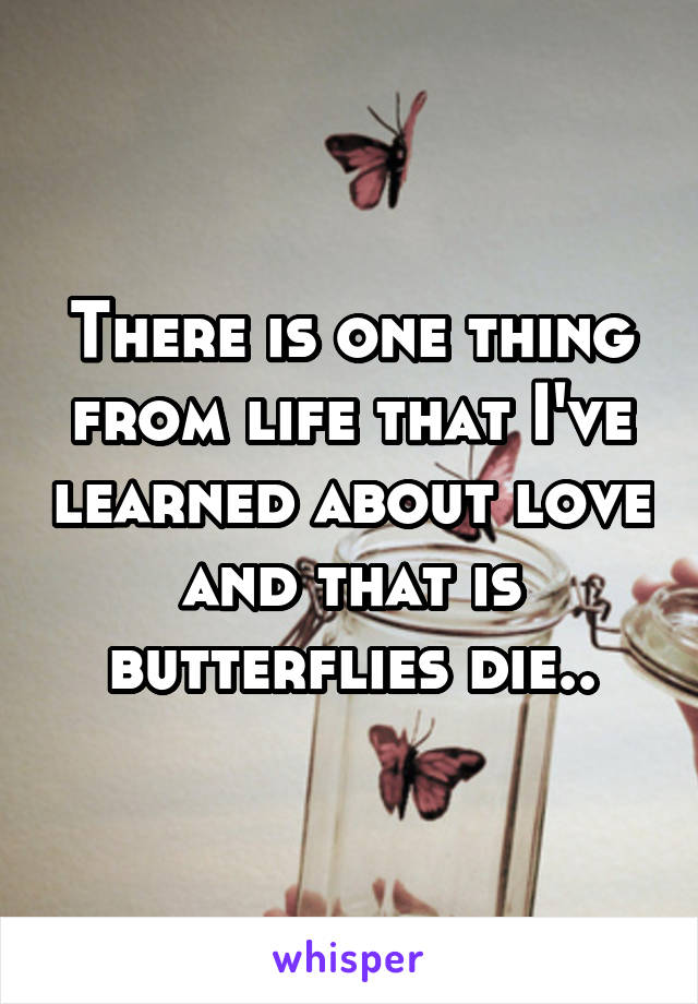 There is one thing from life that I've learned about love and that is butterflies die..