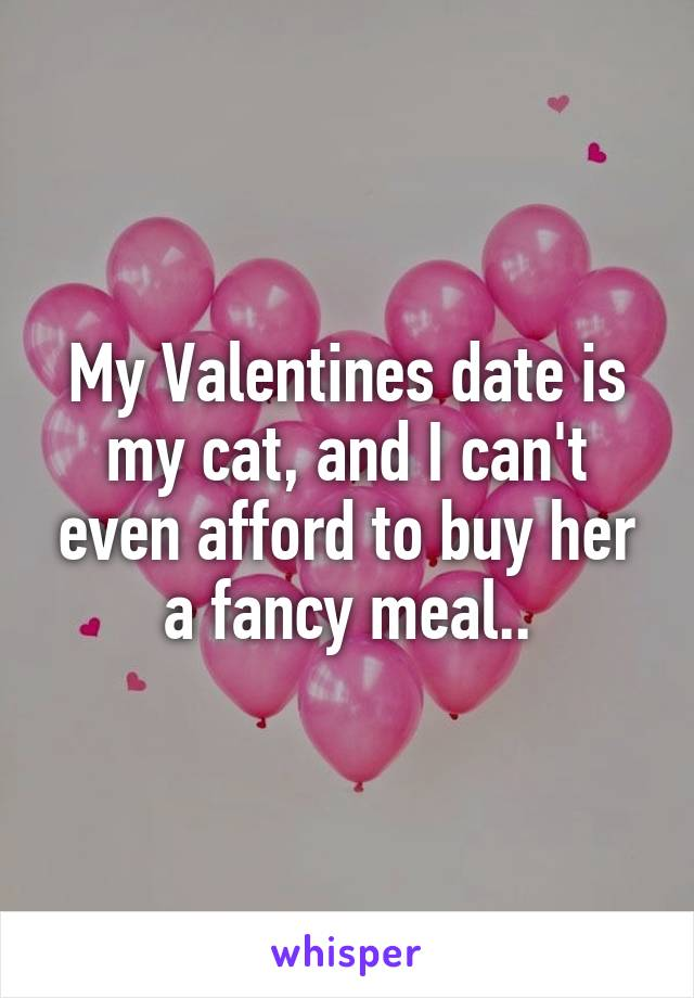 My Valentines date is my cat, and I can't even afford to buy her a fancy meal..