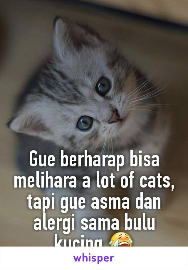 Gue berharap bisa melihara a lot of cats, tapi gue asma dan alergi sama bulu kucing 😭
