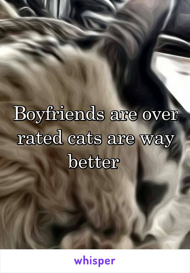 Boyfriends are over rated cats are way better