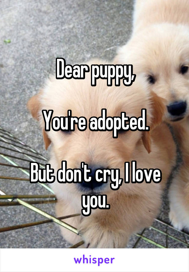 Dear puppy,  You're adopted.  But don't cry, I love you.