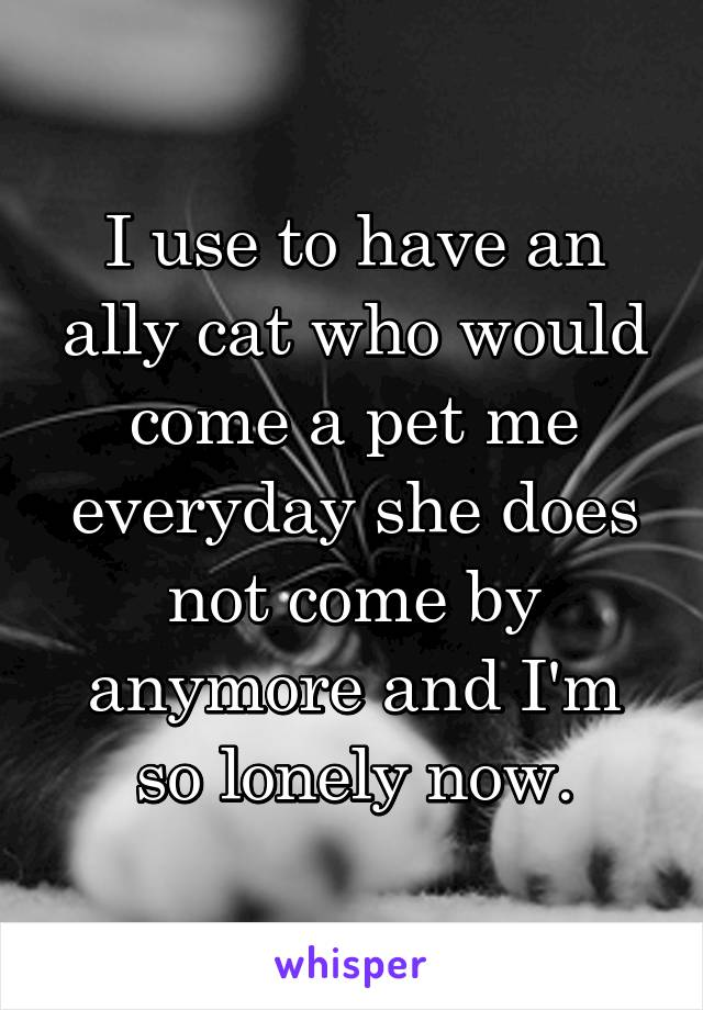I use to have an ally cat who would come a pet me everyday she does not come by anymore and I'm so lonely now.