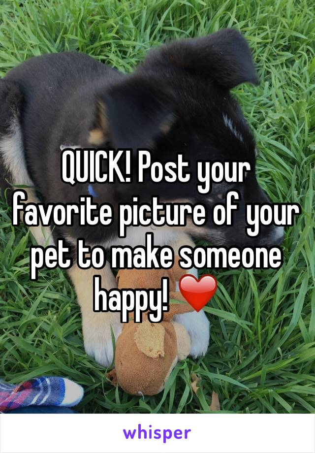 QUICK! Post your favorite picture of your pet to make someone happy! ❤️