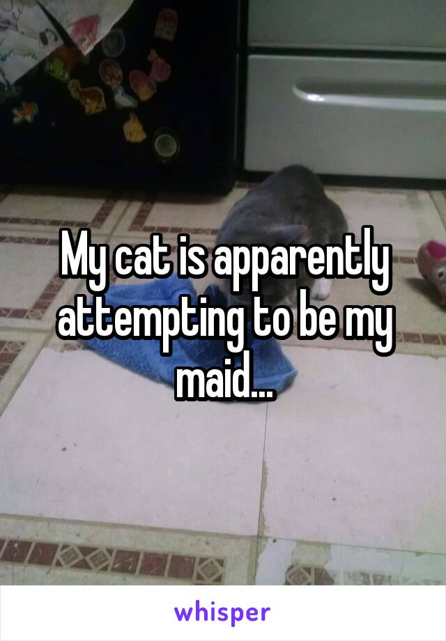 My cat is apparently attempting to be my maid...