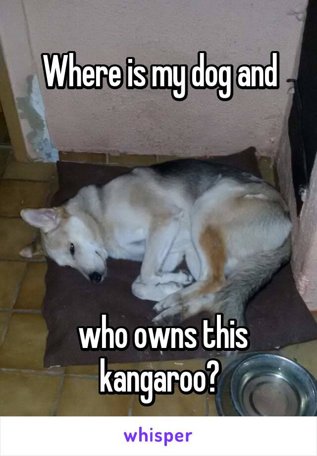 Where is my dog and       who owns this kangaroo?