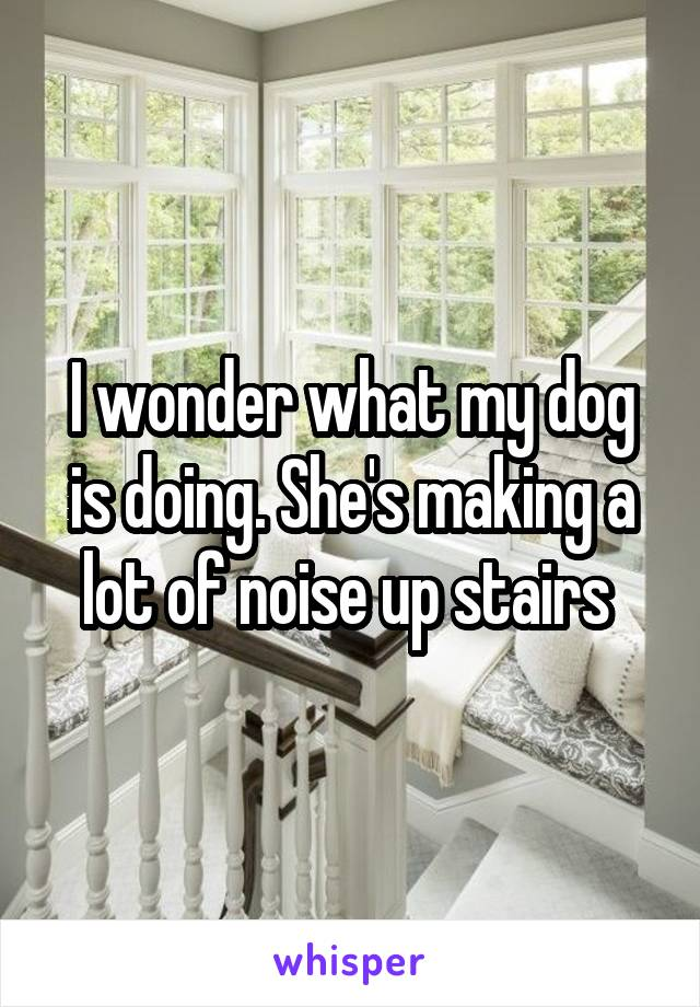 I wonder what my dog is doing. She's making a lot of noise up stairs