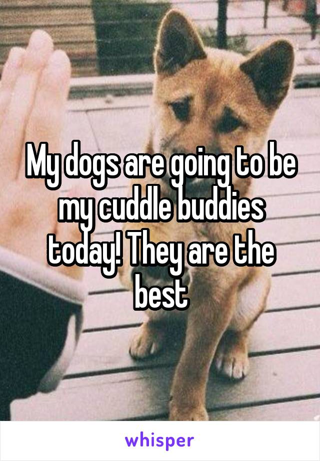 My dogs are going to be my cuddle buddies today! They are the best