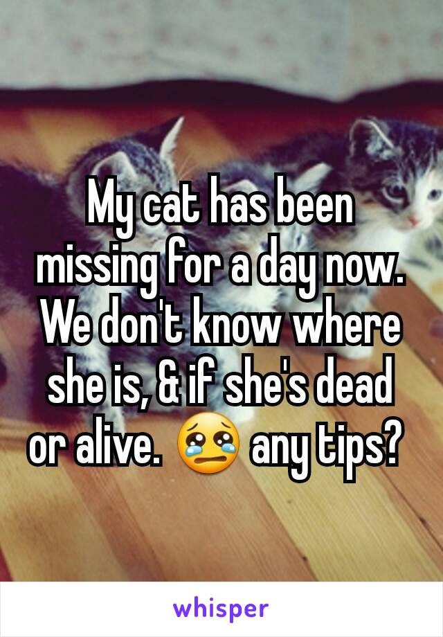 My cat has been missing for a day now. We don't know where she is, & if she's dead or alive. 😢 any tips?