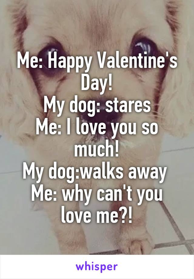 Me: Happy Valentine's Day! My dog: stares Me: I love you so much! My dog:walks away  Me: why can't you love me?!