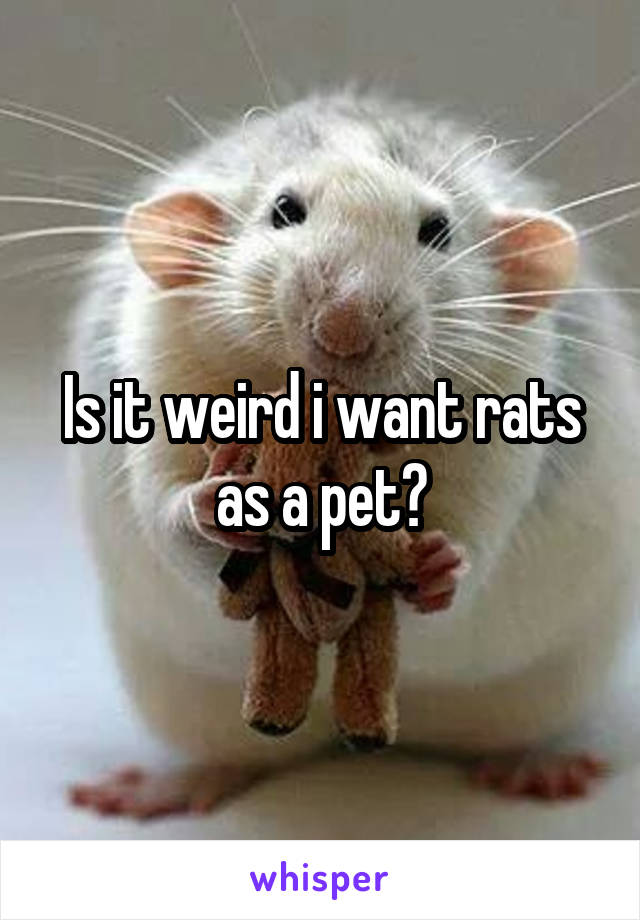 Is it weird i want rats as a pet?