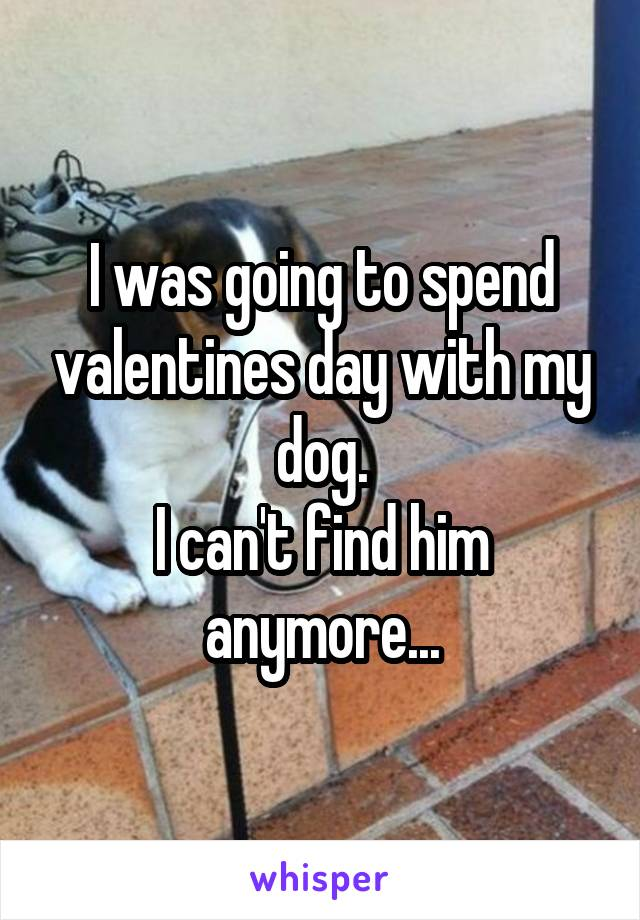 I was going to spend valentines day with my dog. I can't find him anymore...