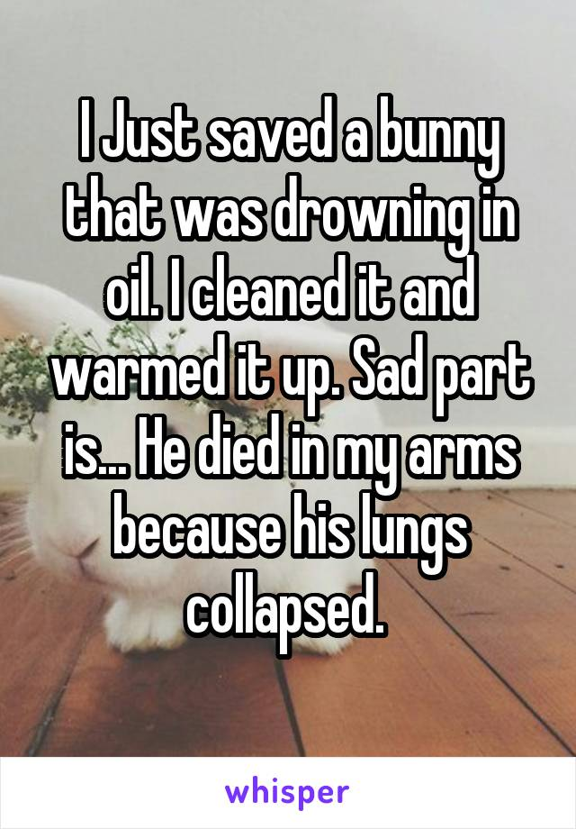 I Just saved a bunny that was drowning in oil. I cleaned it and warmed it up. Sad part is... He died in my arms because his lungs collapsed.