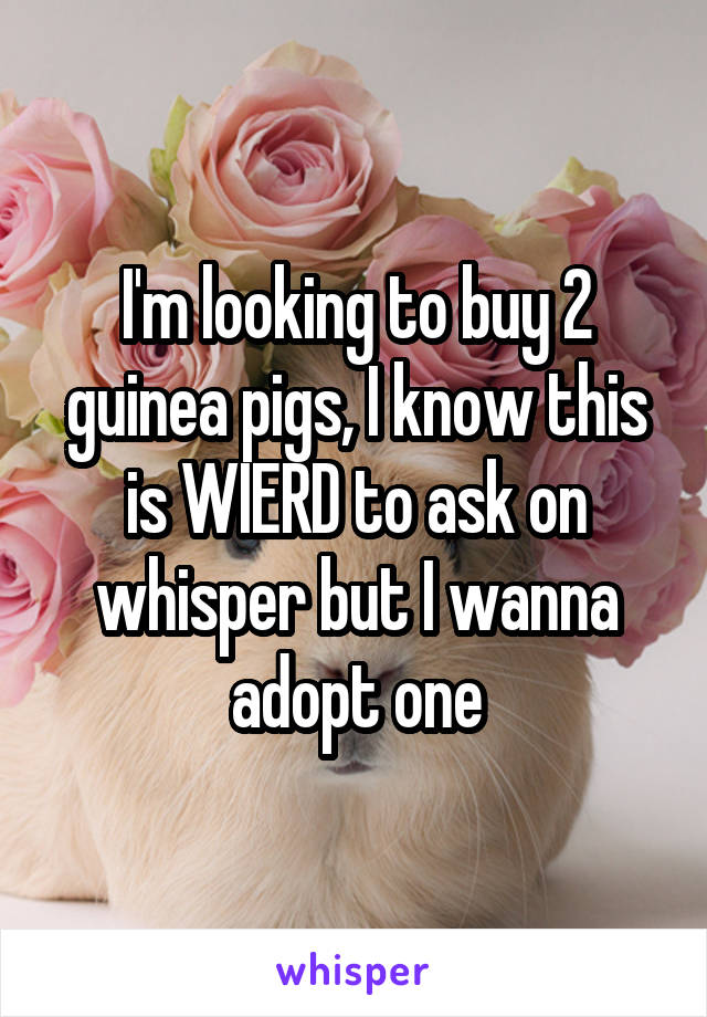 I'm looking to buy 2 guinea pigs, I know this is WIERD to ask on whisper but I wanna adopt one
