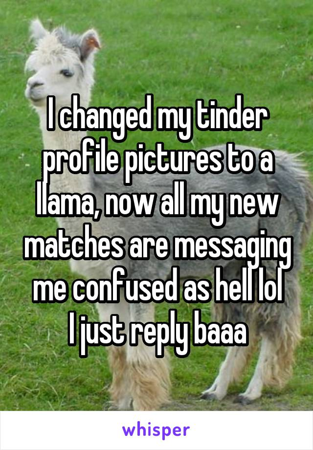 I changed my tinder profile pictures to a llama, now all my new matches are messaging me confused as hell lol I just reply baaa