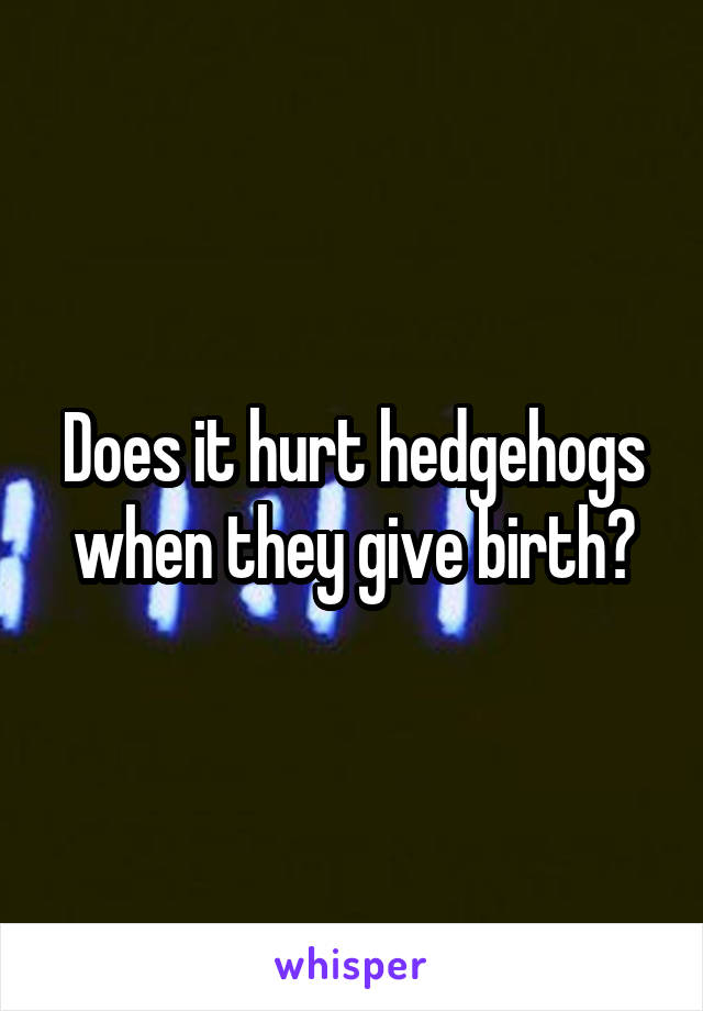 Does it hurt hedgehogs when they give birth?