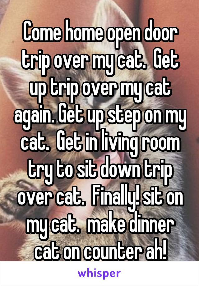 Come home open door trip over my cat.  Get up trip over my cat again. Get up step on my cat.  Get in living room try to sit down trip over cat.  Finally! sit on my cat.  make dinner cat on counter ah!
