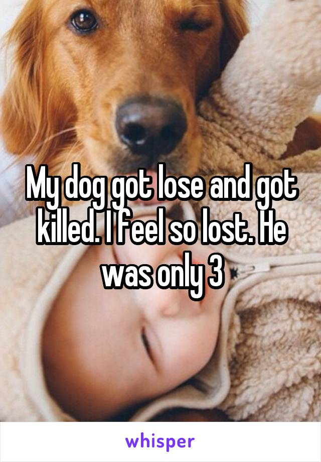 My dog got lose and got killed. I feel so lost. He was only 3