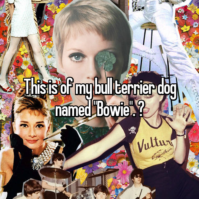 """This is of my bull terrier dog named """"Bowie"""". ♡"""
